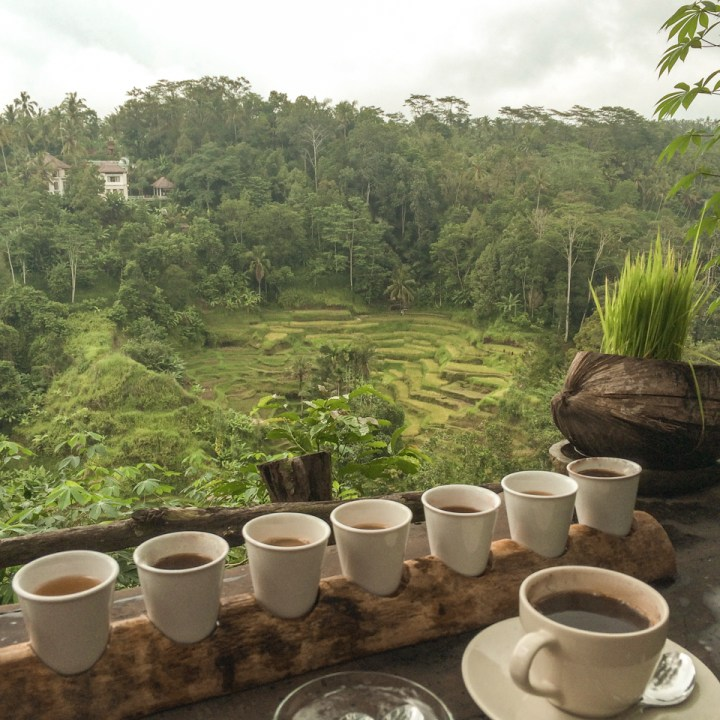 spellbound travels satria coffee plantation bali