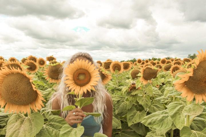 spellbound travels toronto sunflower field