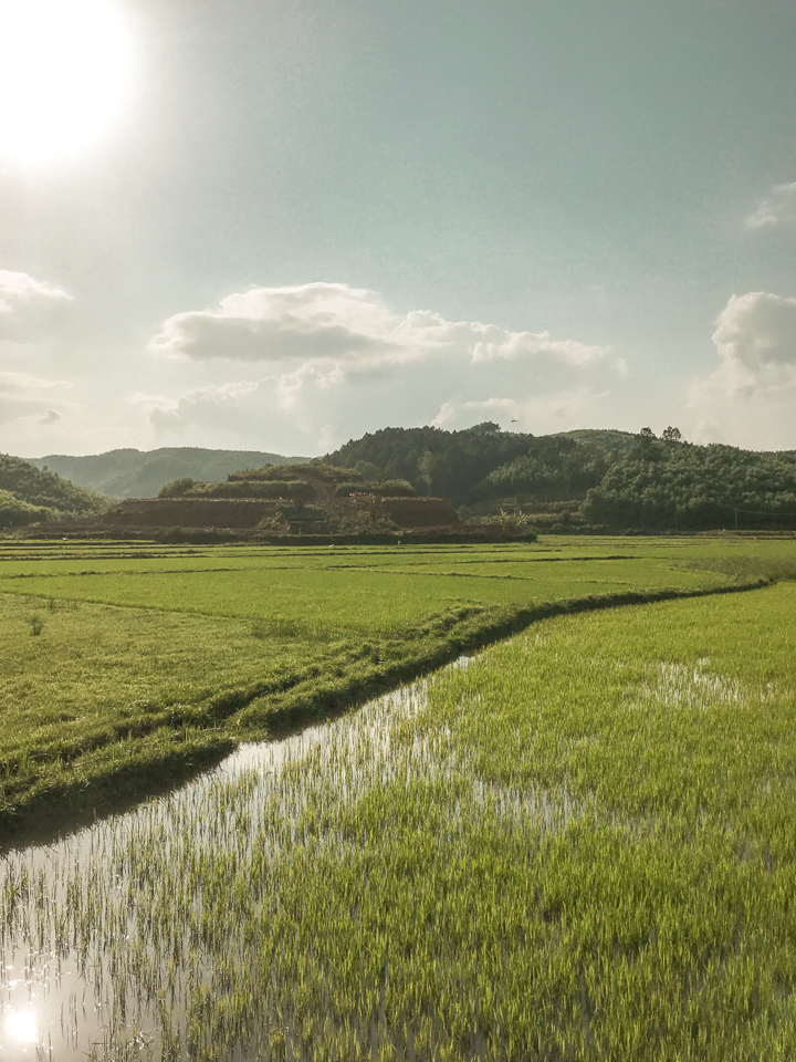spellbound travels phong nha rice field