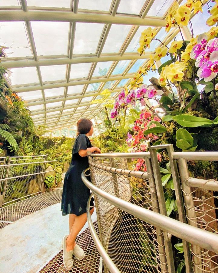 spellbound travels singapore botanic gardens