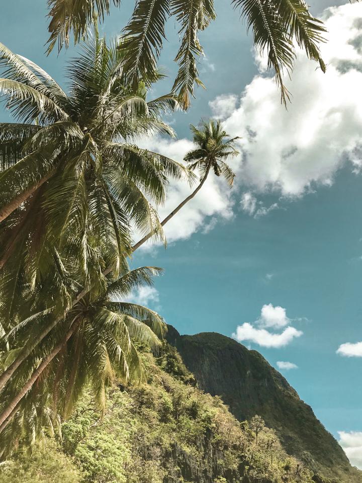 spellbels philippines island palm tree view ound trav