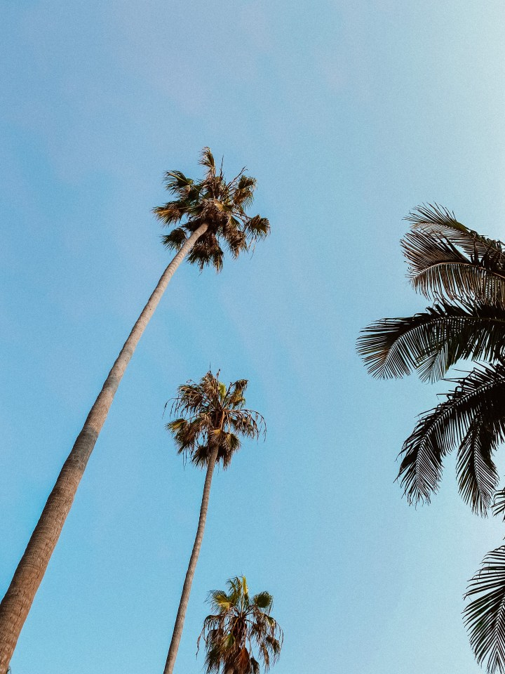 spellbound travels pacific beach san diego palm trees