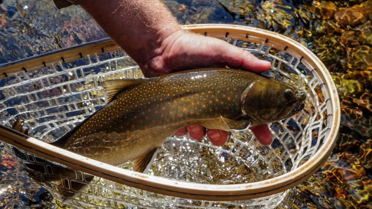 Why Catch and Release Fishing Isn't Just for Fly Anglers