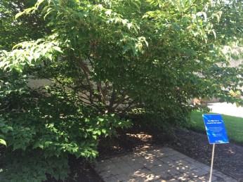 Wishing Tree, Yoko Ono