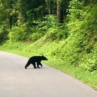 Driving into Cades Cove, what a thrill