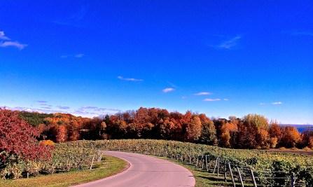 On our vineyard tour