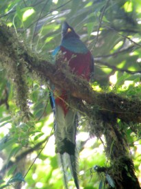Why hello, Mr. Quetzal (photographed through a telescope)