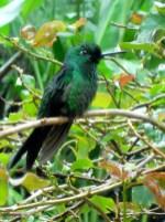 Hummingbird!