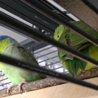 Der Sperlingspapageien-Käfig