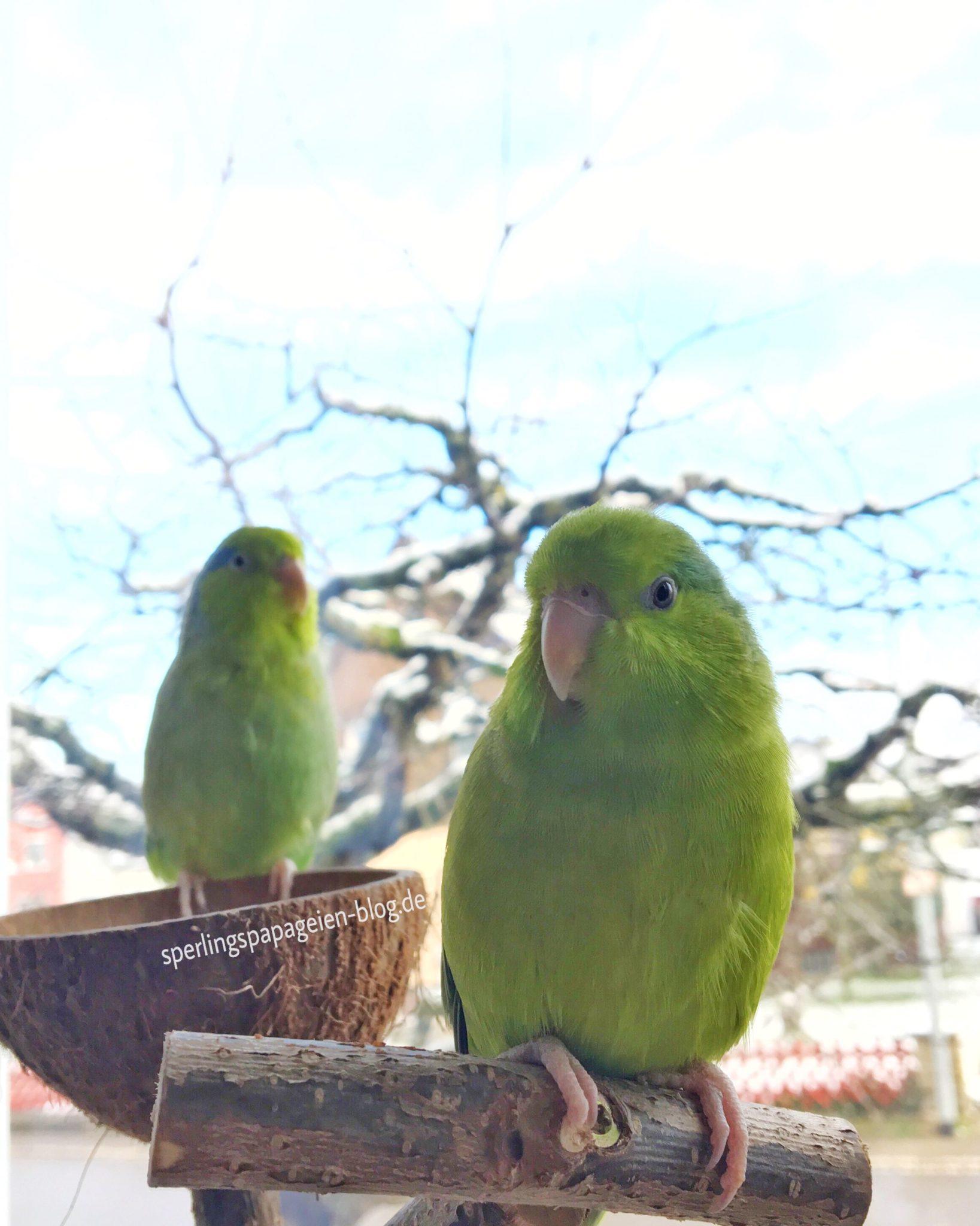 Sperlingspapageien und andere Tropenvögel haben im Winter besondere Ansprüche an die Temperatur, Beleuchtung und Luftfeuchtigkeit