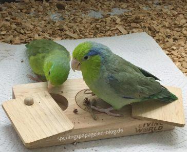 Foraging Toy für kleine Papageien Intelligenzspielzeug Sperlingspapageien Agaporniden Wellensittiche
