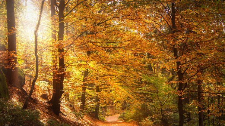HTG-Herbst-Wald-1-1920