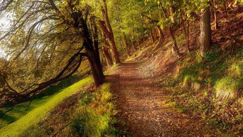HTG-Herbst-Wald-4-1920