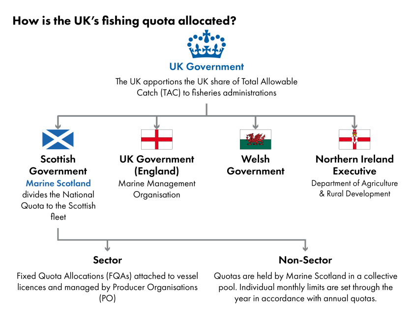 The image shows a flow chart of the process for allocating fishing quota in the UK. The UK government apportions the UK share of the Total Allowable Catch to fisheries devolved administrations in the UK. Marine Scotland is responsible for dividing Scotland's share to the Scottish fleet. Most quota goes to the 'Sector' where Fixed Quota Allocations are attached to vessel licences and managed by Producer Organisations. Some quota also goes to the 'Non-sector' and are held by Marine Scotland in a collective pool. Individual monthly limits are set through the year in accordance with annual quotas.