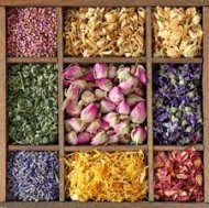 Herbal Sampler: Spring Flowers ~ Herbs ~ Collection