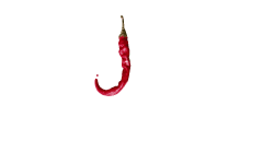 Spice Junction Blend Logo - White