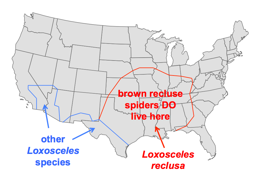 Brown Recluse Region