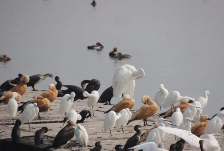 Dehradun's Asan Conservation Joins The International Wetland Site