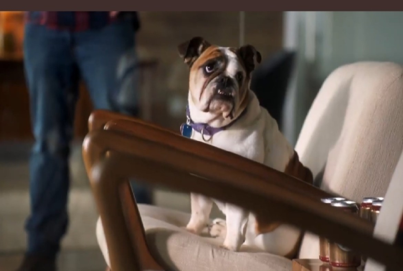 Busch Dog Job