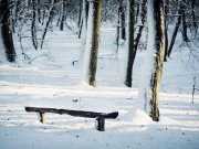 A forest and wooden bench covered in winter snow.