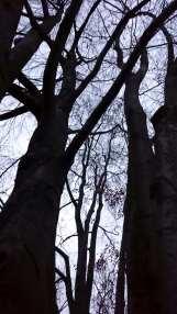 Blick in die Baumkrone der Rotbuche