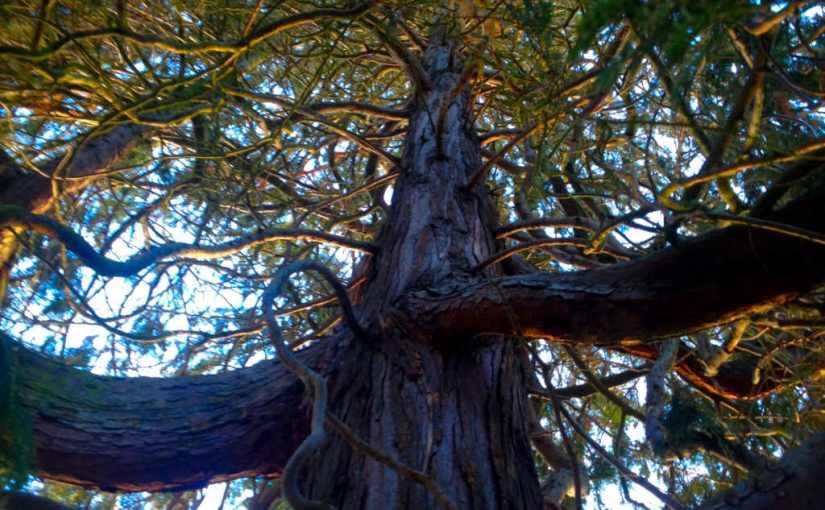 Mein Freund der Baum bestimmt