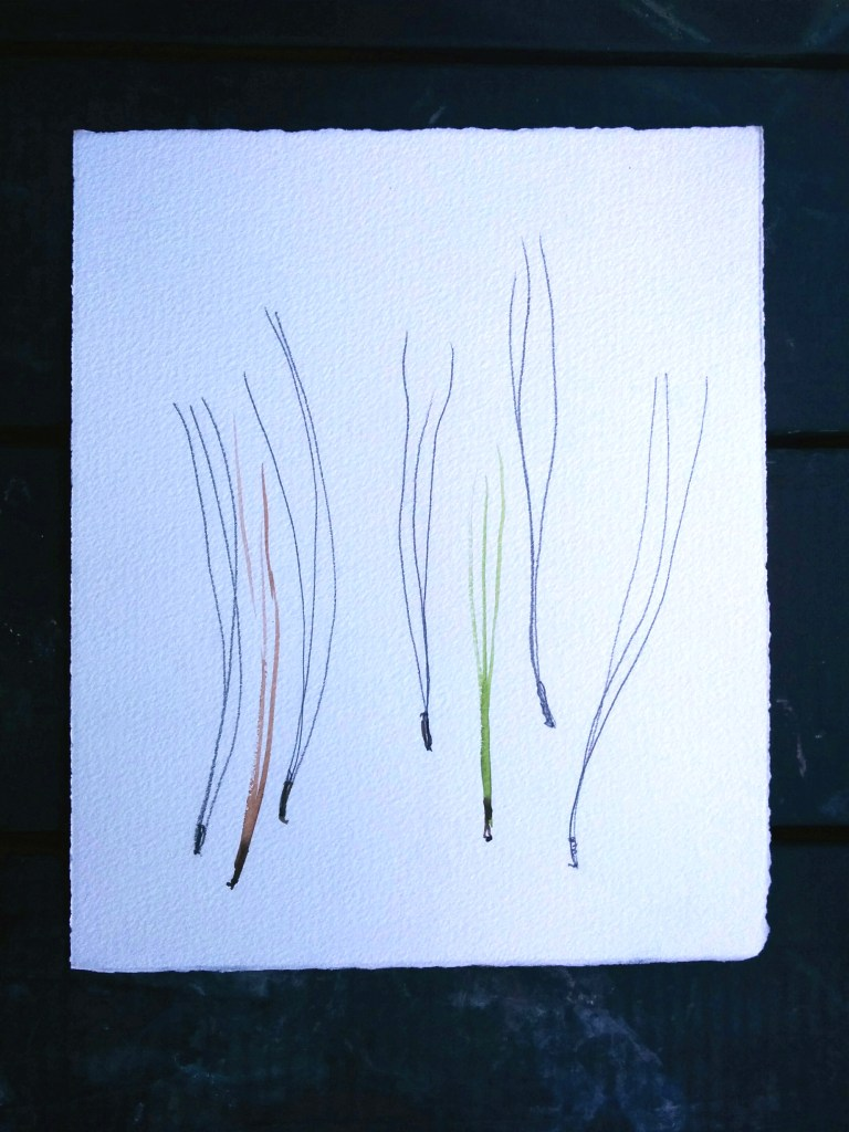 study of line, practice the motions of mark making with pine needles