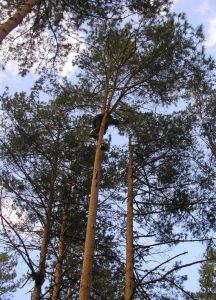 порізка дерев Хмельницький