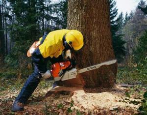 Удаление деревьев Хмельницкий
