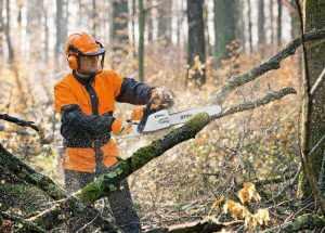 Обрезка дерева Хмельницкий