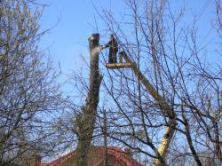 Видалити дерево Хмельницкий