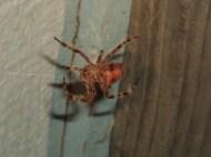 Nevada critter (2)