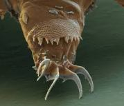 microscopic monsters (31)