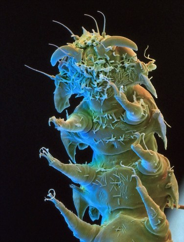 microscopic monsters (5)