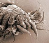 microscopic monsters (62)