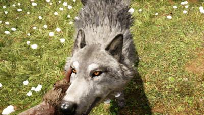 Man kan kose på ulven...