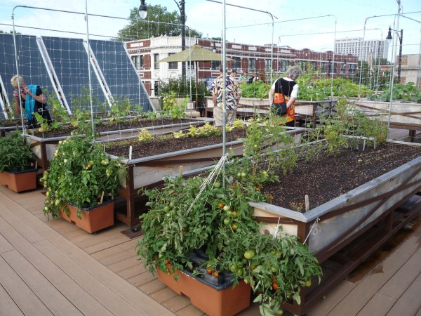 rooftop garden If Xzibit Pimped My Roof | Spinach In Our Teeth