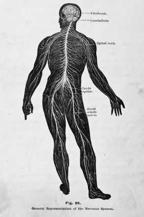 chiropractic-101-nervous-system