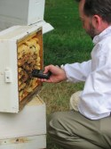 Interviewing the Bees
