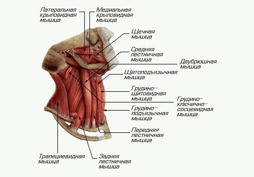 deteriorarea buzei fibroase a articulației umărului