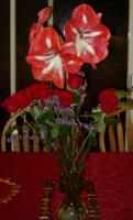 Lene's amaryllis and Richard's roses