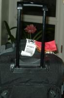 Lady Jane amaryllis packs its bags