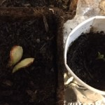 two halves of the kernel vs an actual sprout