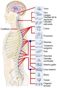 systeme_nerveux_relation