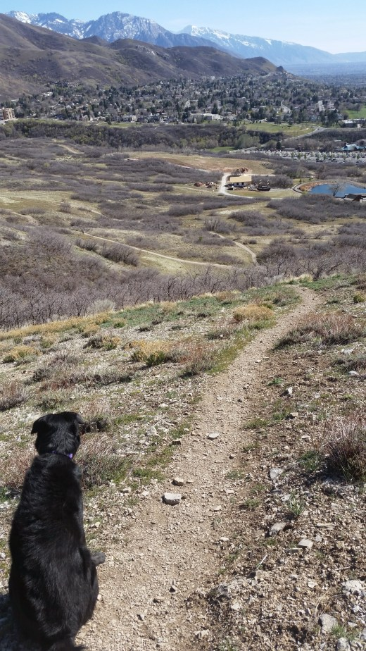 Belka hiking the beautiful Bonneville Shoreline Trail in Salt Lake City, Utah with her spinally fused mom trying to keep up.