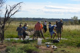 The most people I have EVER seen in a spring - the iROOS help Nathan (UC) sample for Mosquito fish (Gambusia holbrooki) in a spring drain. Photo Ian Rossini