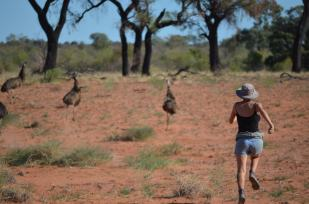 Emus are also everywhere, and are so curious that they can get right next to you before they run away. Or you could just chase them.