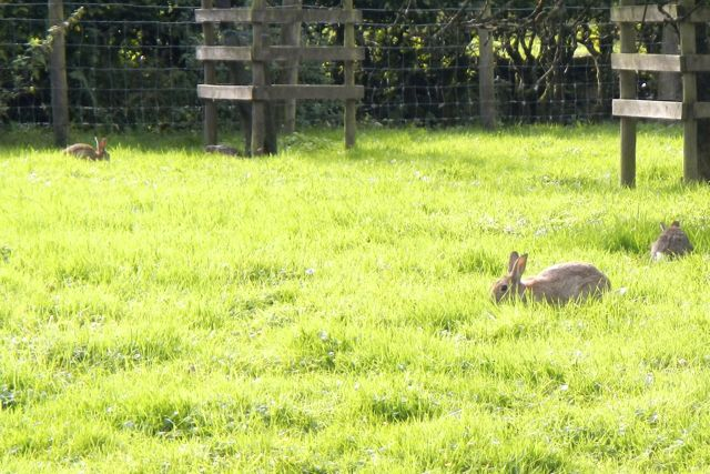Peter Rabbits (Beatrix Potter's farm)