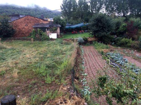 Abuelita's garden - we were eating fresh!