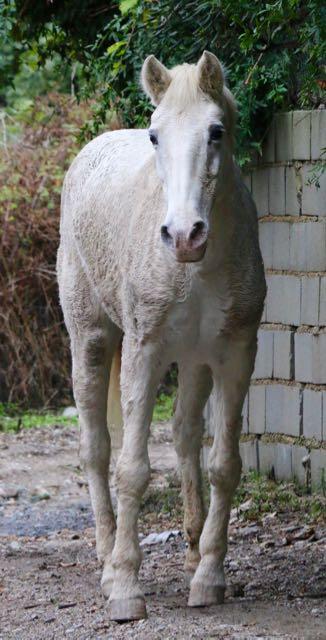 Pela, a free-range horse